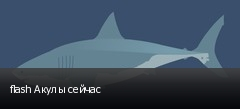 flash Акулы сейчас