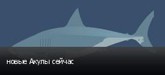 новые Акулы сейчас