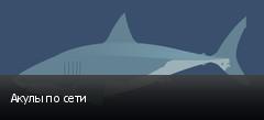 Акулы по сети