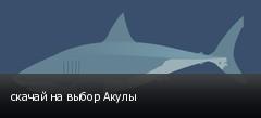 скачай на выбор Акулы