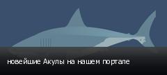 новейшие Акулы на нашем портале