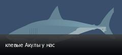 клевые Акулы у нас