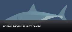 новые Акулы в интернете
