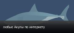 любые Акулы по интернету