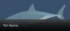 Топ Акулы