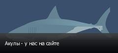 Акулы - у нас на сайте