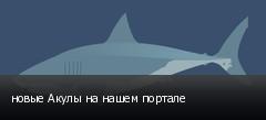 новые Акулы на нашем портале