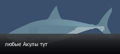 любые Акулы тут
