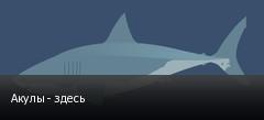 Акулы - здесь