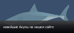 новейшие Акулы на нашем сайте